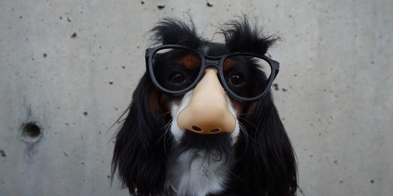 Jak ogon macha psem – o emocjach i naszym mózgu